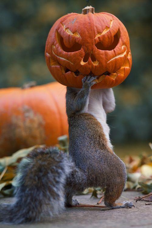 Halloween ardilla